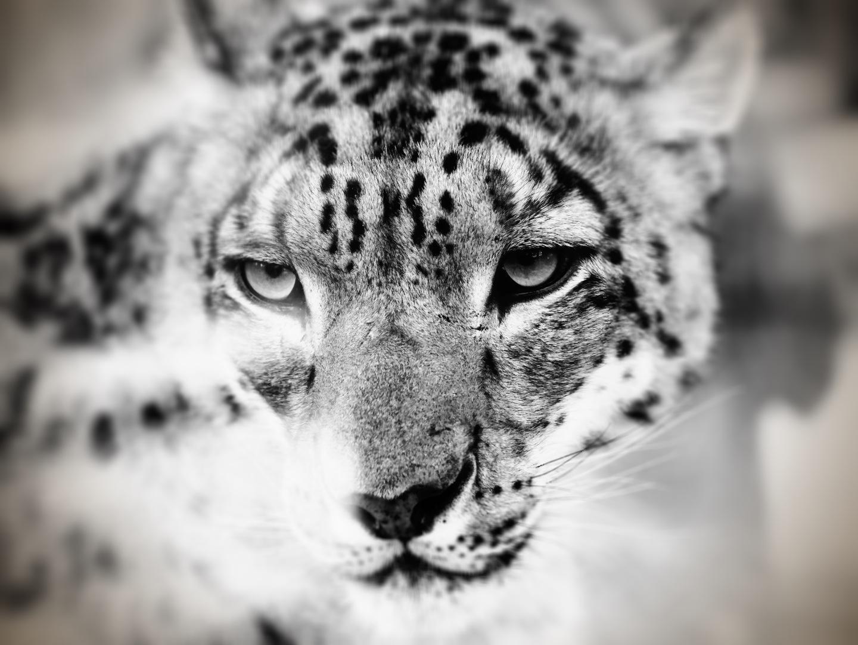 Inaudible Voices protection des espèces menacées par Free Spirit