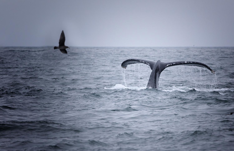 ban baleine