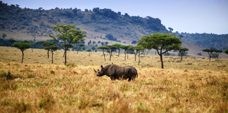 ban rhino