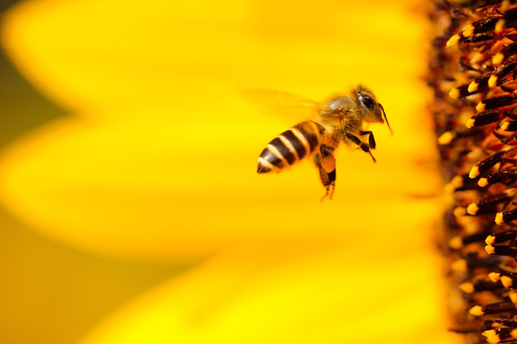 Parrainage abeilles