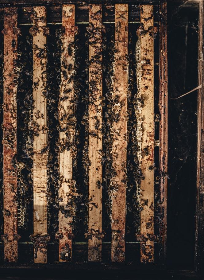 apiculture apiculteur bio Inaudible Voices