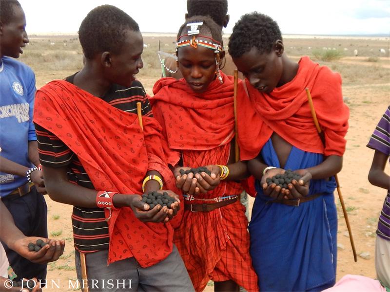 dissémination de graines d'arbres Kenya Masaï