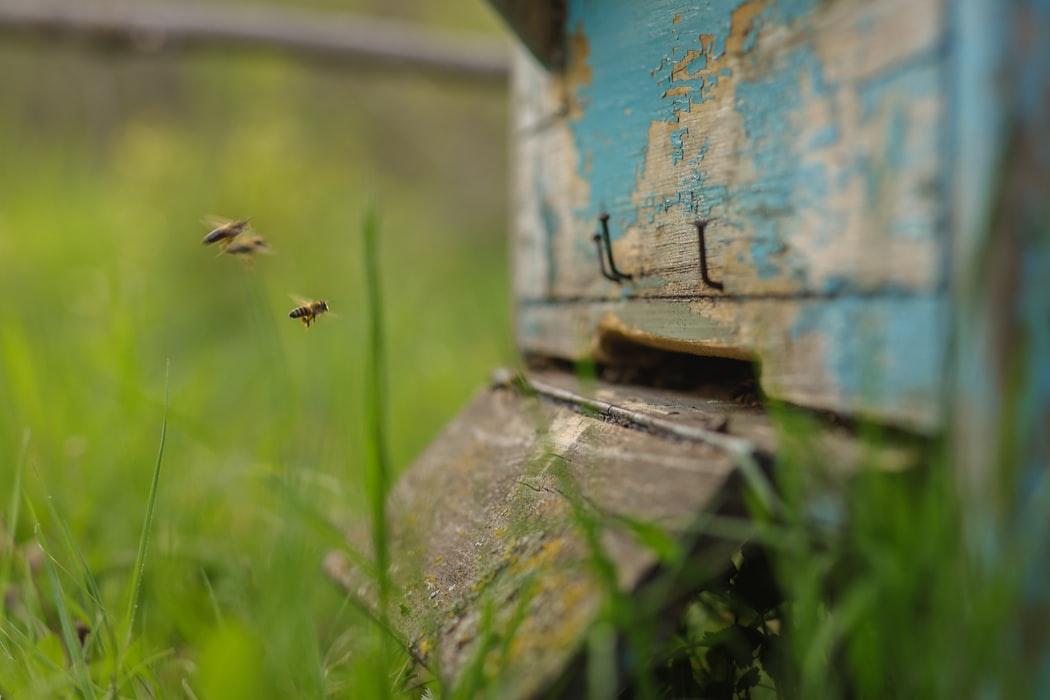 Actions concrètes pour la protection des abeilles en France - Inaudible Voices