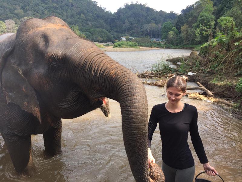 Réserve en Thaïlande pour les éléphants - Inaudible Voices