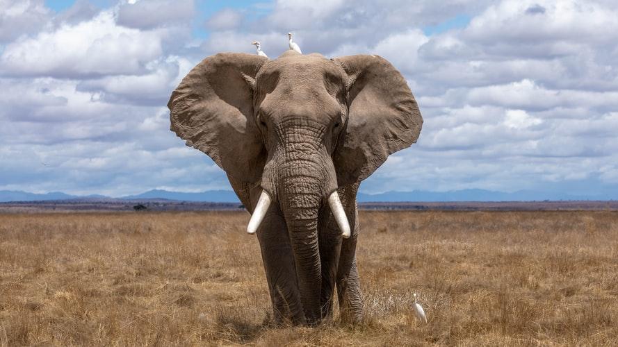 Inaudibe Voices Zoohackathon Lutte contre le trafic d'animaux sauvages