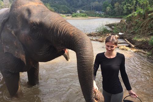 Réserve d'éléphants en Thaïlande Asie Nos actions