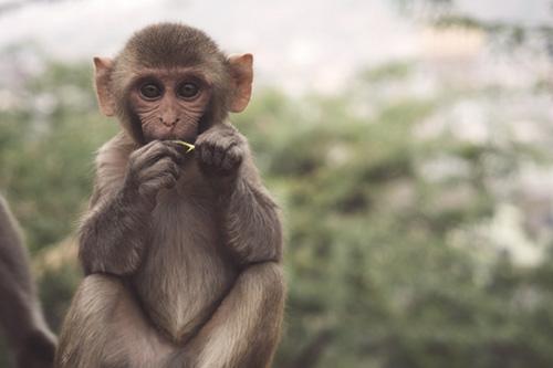 refuge de primates singes en Afrique